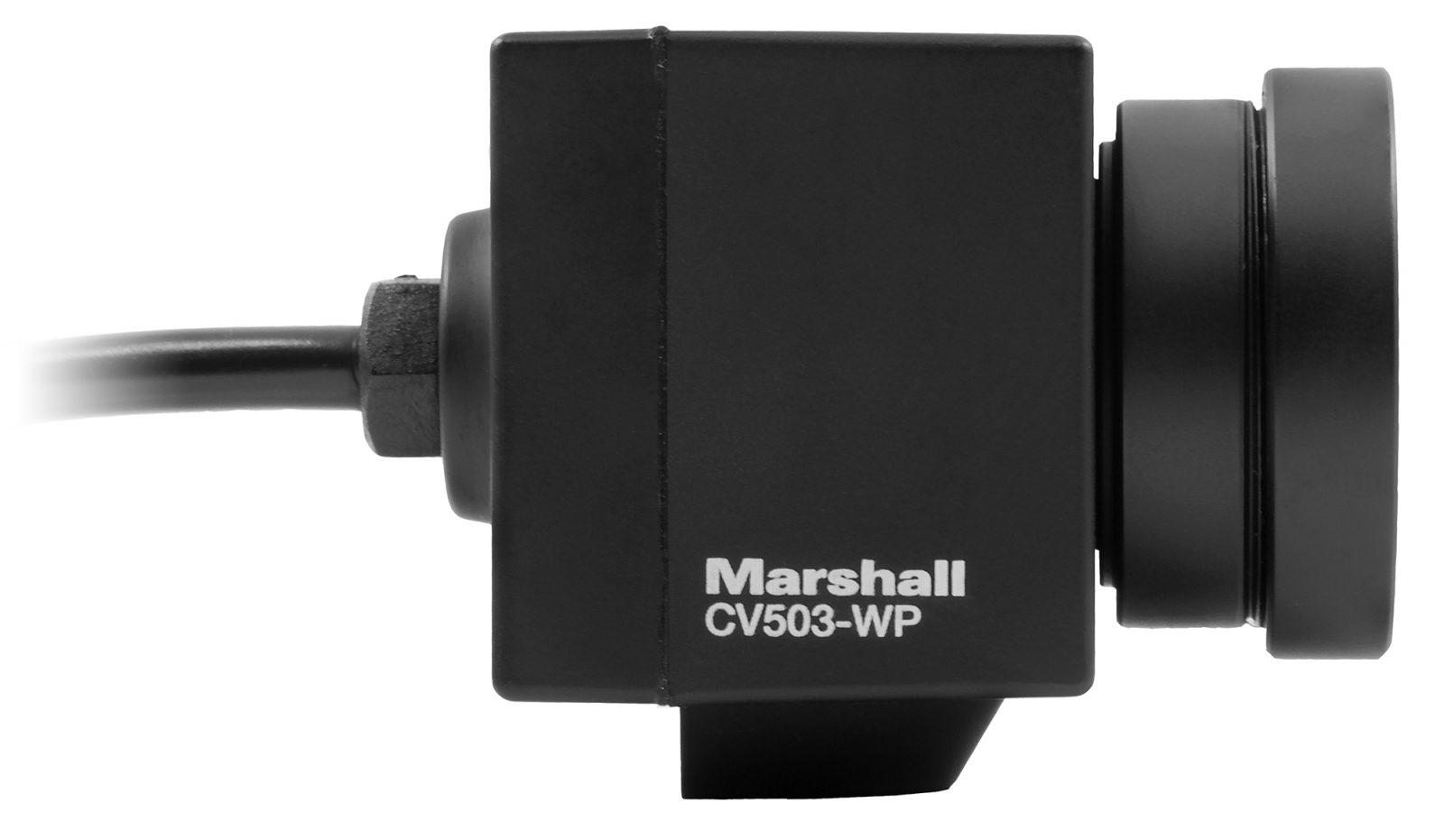 CV503-WP right